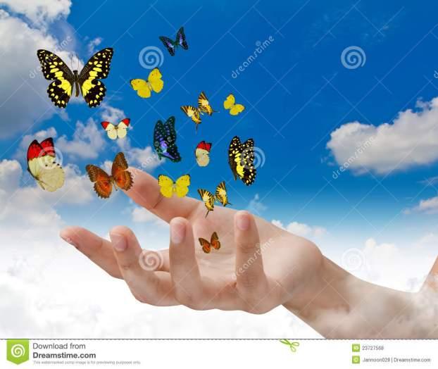 Mariposas de luz-imagen tomada de internet